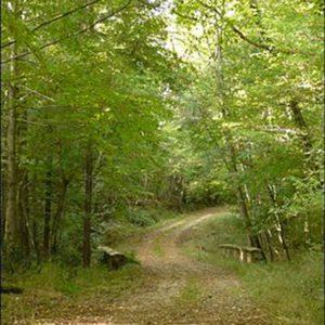 La forêt de la Grésigne et ses balades.