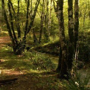 De nombreux sentiers de randonnée sont disponibles à proximité