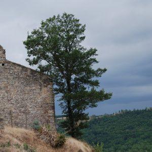 Sur les hauts de Puycelsi, vue sur la forêt de la Grésigne